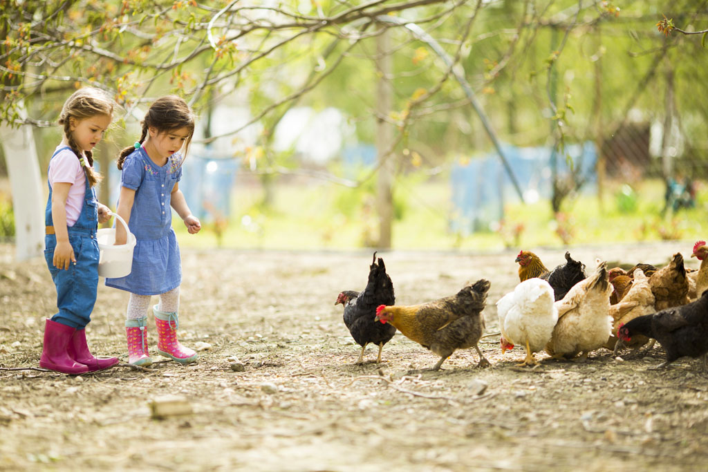 Children and Chickens